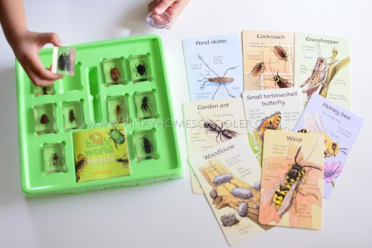 Inspecting Resin Insects Specimens