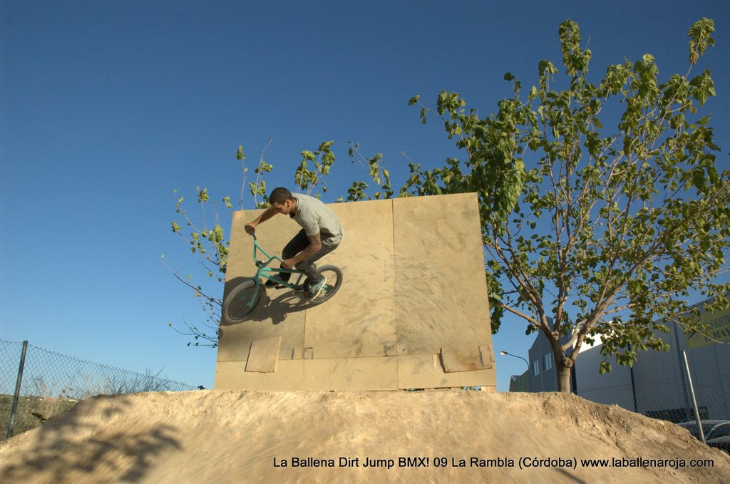Ballena Dirt Jump BMX 2009 - BMX_09_0111.jpg
