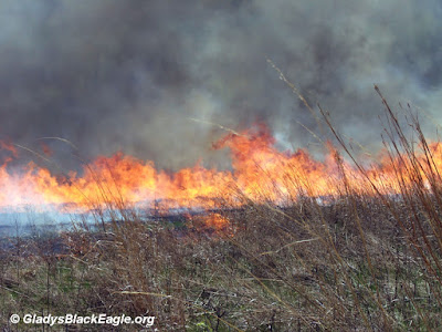 Managed prairie burn