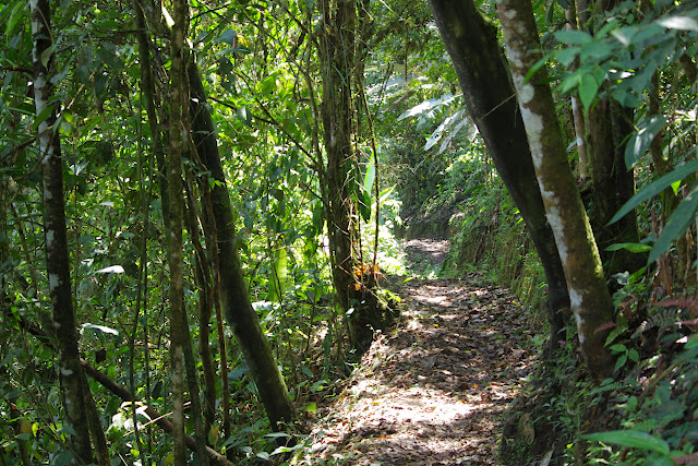 Sentier de Los Cedros, 1200 m. San Miguel de Chontal (Intag, Imbabura, Équateur), 18 novembre 2013. Photo : J.-M. Gayman
