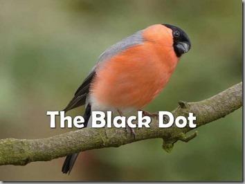 black dot 1
