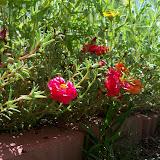 Gardening 2010, Part Three - 101_4393.JPG
