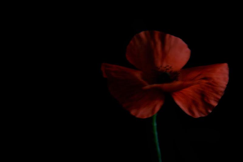 Rosso di attilio_corso