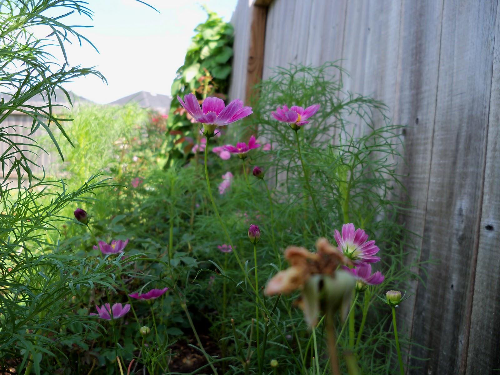 Gardening 2010, Part Two - 101_2635.JPG