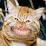 dan deaton's profile photo