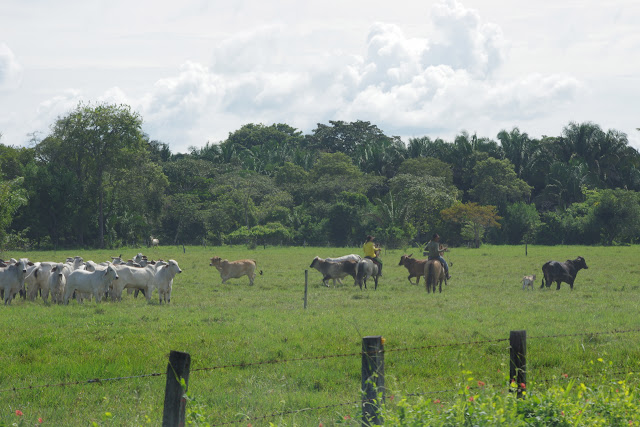 Biotope de P. eurimedes arriphus : une forêt galerie dans les Llanos, Fundo Palmarito, 265 m (Yopal, Casanare, Colombie), 7 novembre 2015. Photo : J.-M. Gayman