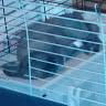 javier simois