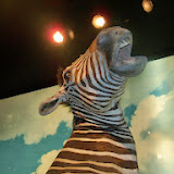 Houston Museum of Natural Science - 116_2774.JPG