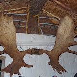 Moose Hunt in northern Quebec - Sept. 2013 - impressive%2Bantlers.JPG