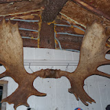 Moose Hunt in northern Quebec - Sept. 2013 - impressive%2Bantlers.JPG