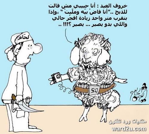 خروف العيد يغازل عودة عناد الجروح
