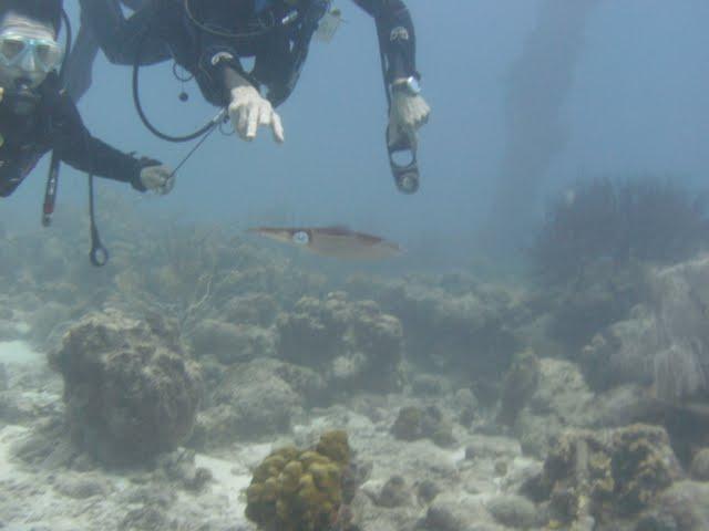 Bonaire 2011 - PICT0056.JPG