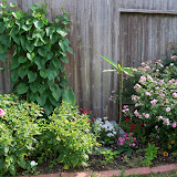 Gardening 2011 - 100_8505.JPG
