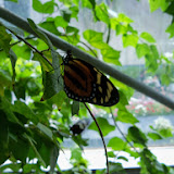 Houston Museum of Natural Science - 116_2891.JPG