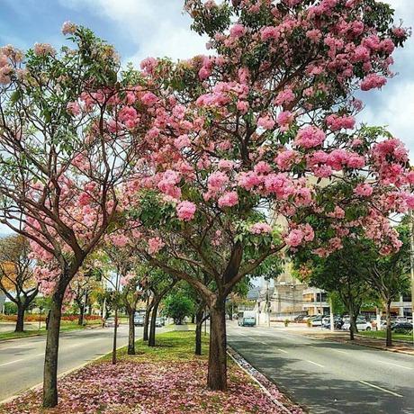 outubro rosa capixaba