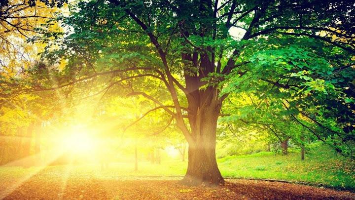 Cụ già trồng cây