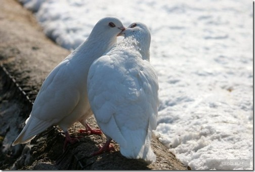 amor entre aniimales (3)