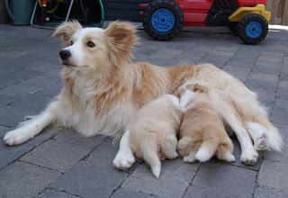 Photo: 9.06.2011 Kenzo   bij mama Spicy  4 weken