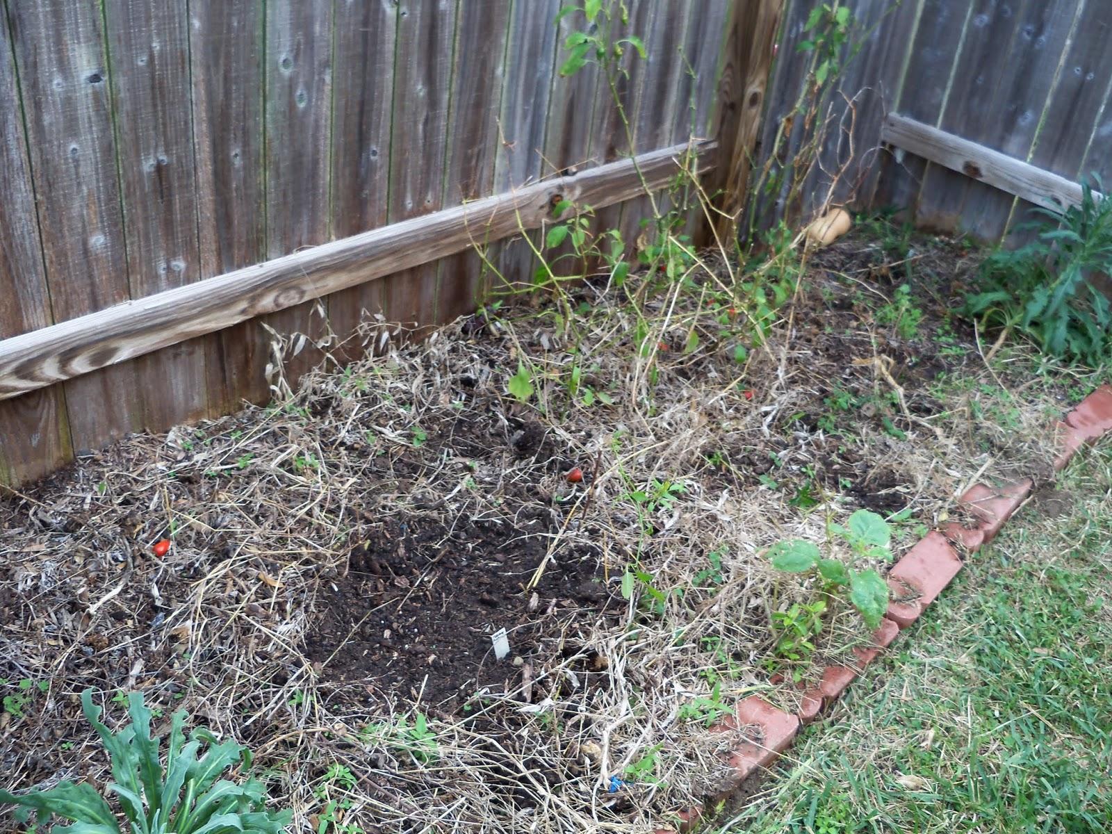 Gardening 2013 - 115_5129.JPG