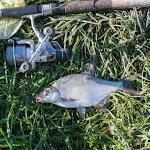 20160526_Fishing_BasivKut_016.jpg