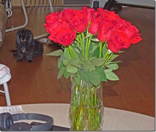 Marcia's Valentine Flowers (Skruffy is jealous)