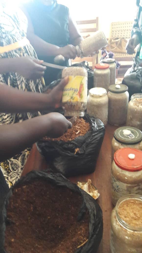 Bafut Council Empowers Farmers on Mushroom Cultivation