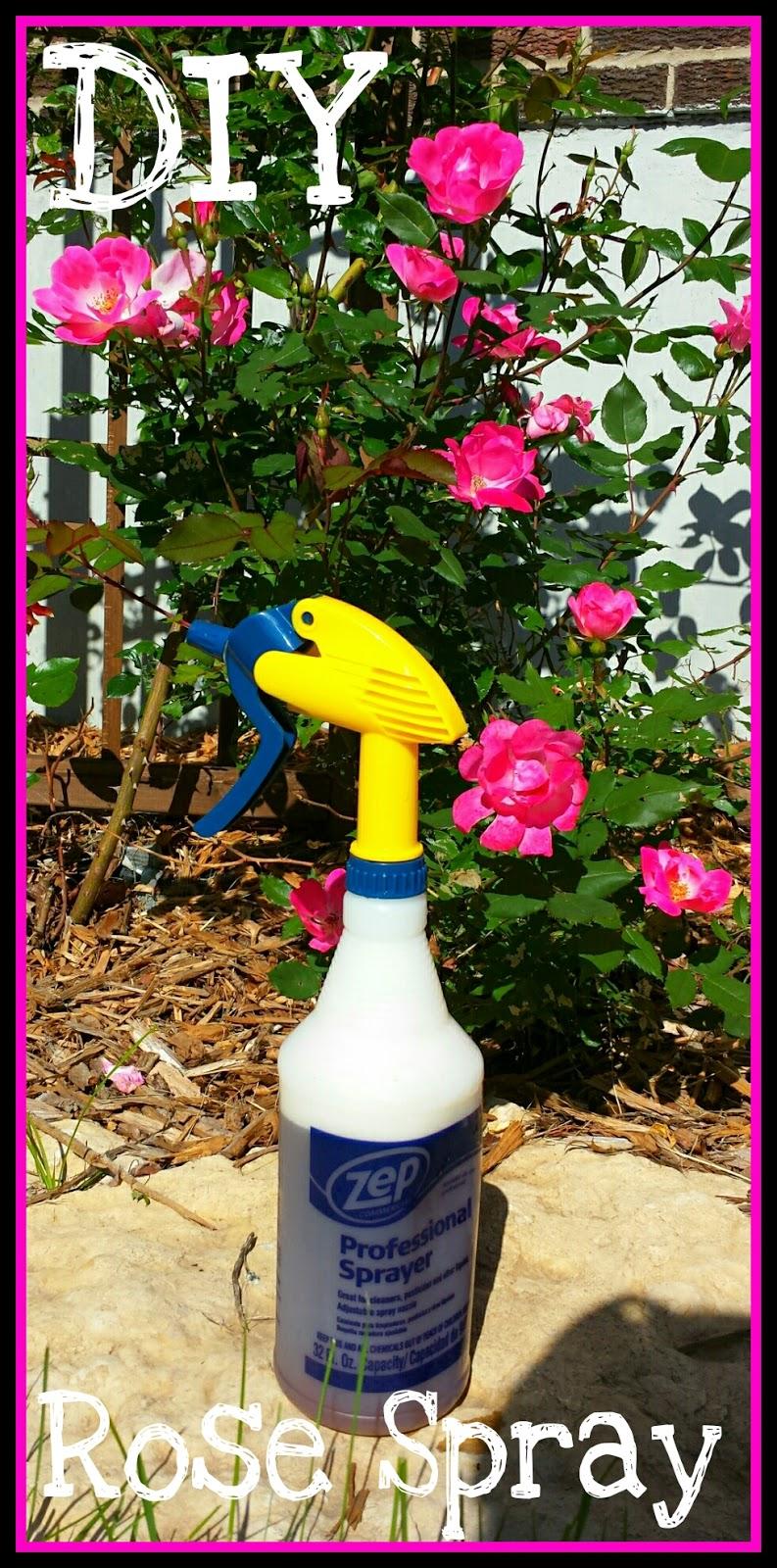 Simple Rose Garden: Garden Of Princess Penny: Cheap & Easy Rose Bug Spray