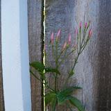 Gardening 2010 - 101_1249.JPG