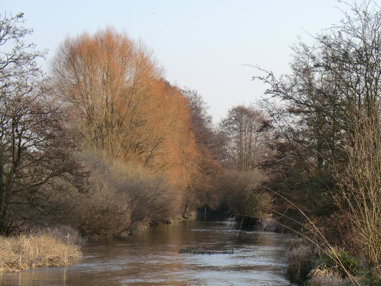 CIMG1726 River Test at Whitchurch