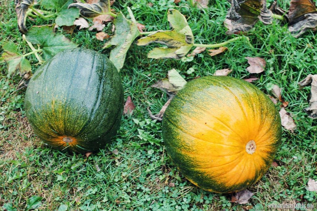 [pumpkin12%5B8%5D]