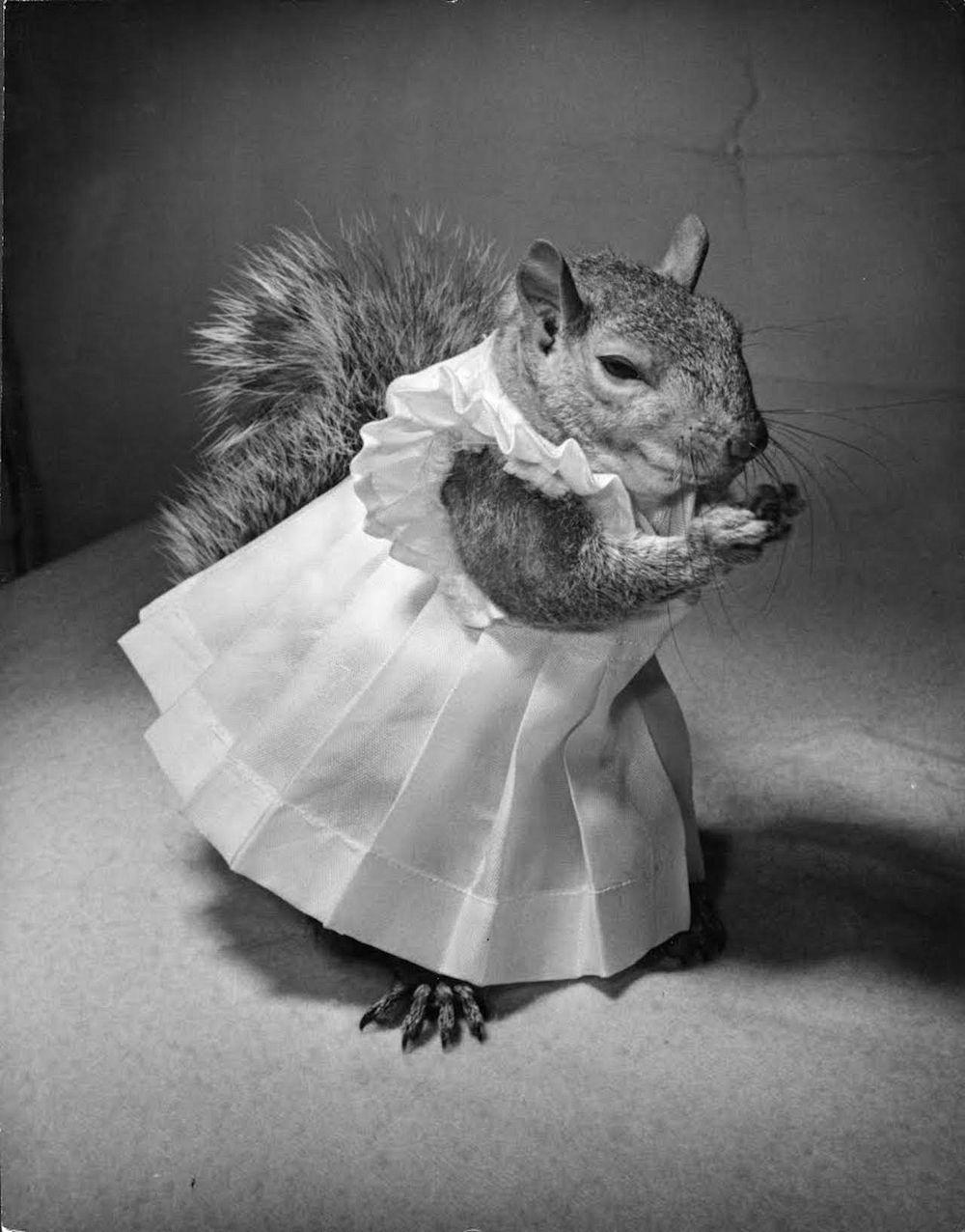 tommy-tucker-squirrel-7