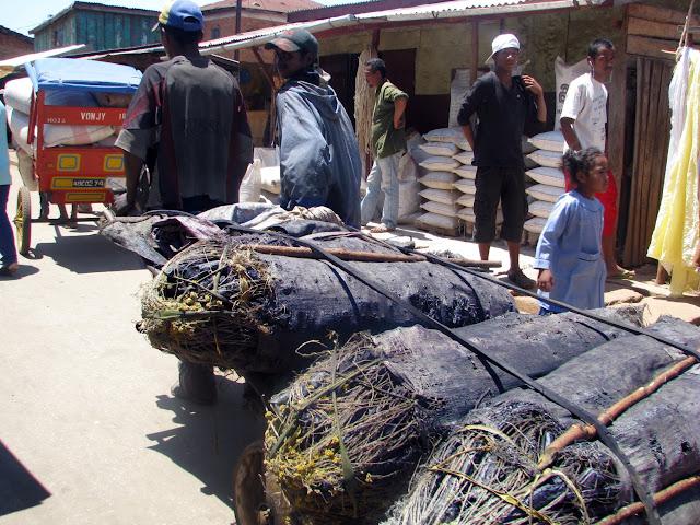 صور من مدغشقر Madagascar 14847160824