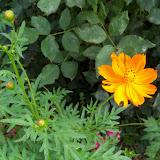 Gardening 2012 - 115_1690.JPG