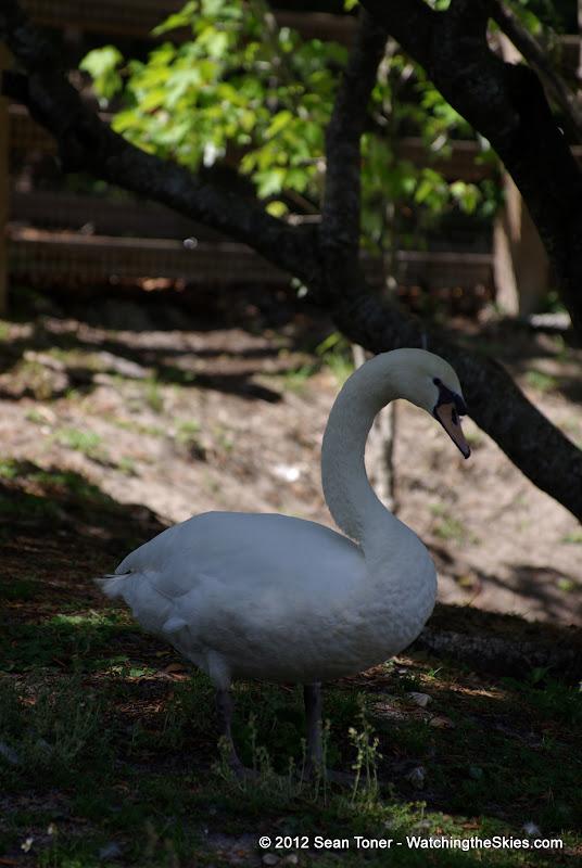 04-07-12 Homosassa Springs State Park - IMGP4516.JPG