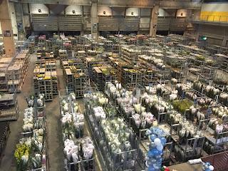 花が立ち並ぶ大田市場