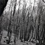 1985_04_13-001 Belgrat Ormanı Yemek Pişirme Tatbikatı.jpg
