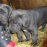 Sofia & Cobalt Blues 2/8/14 litter - SAM_8048.JPG