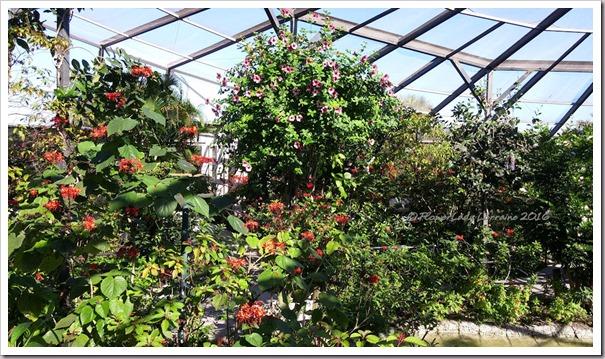 10-22-plants