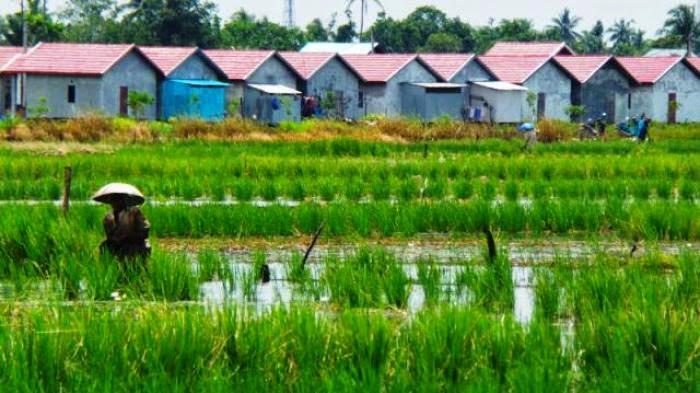 75 Ribu Hektare Lahan Pertanian Kalsel Dialihfungsikan