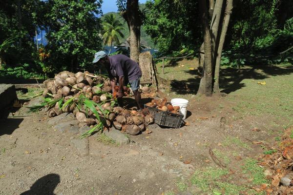 Coconut deHusking