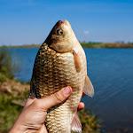 20150427_Fishing_Prylbychi_054.jpg
