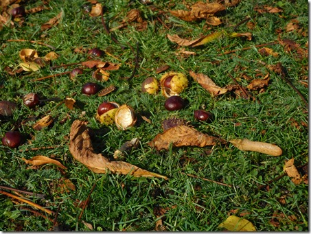 2 conkers