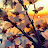 Iin Sudarwati avatar image