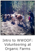 intro to wwoof - volunteering at organic farms