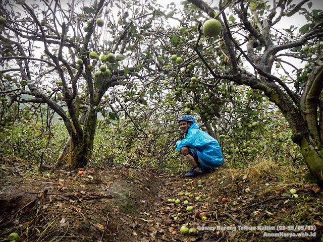 Mengunjungi Perkebunan Apel di sekitar Selecta (Batu)
