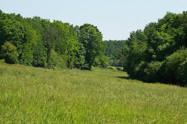 Lisière et prairie, près des Hautes-Lisières ; biotope de nombreux lycènes, de Pyronia tithonus, etc. Photo prise le 31 mai 2009, J.-M. Gayman