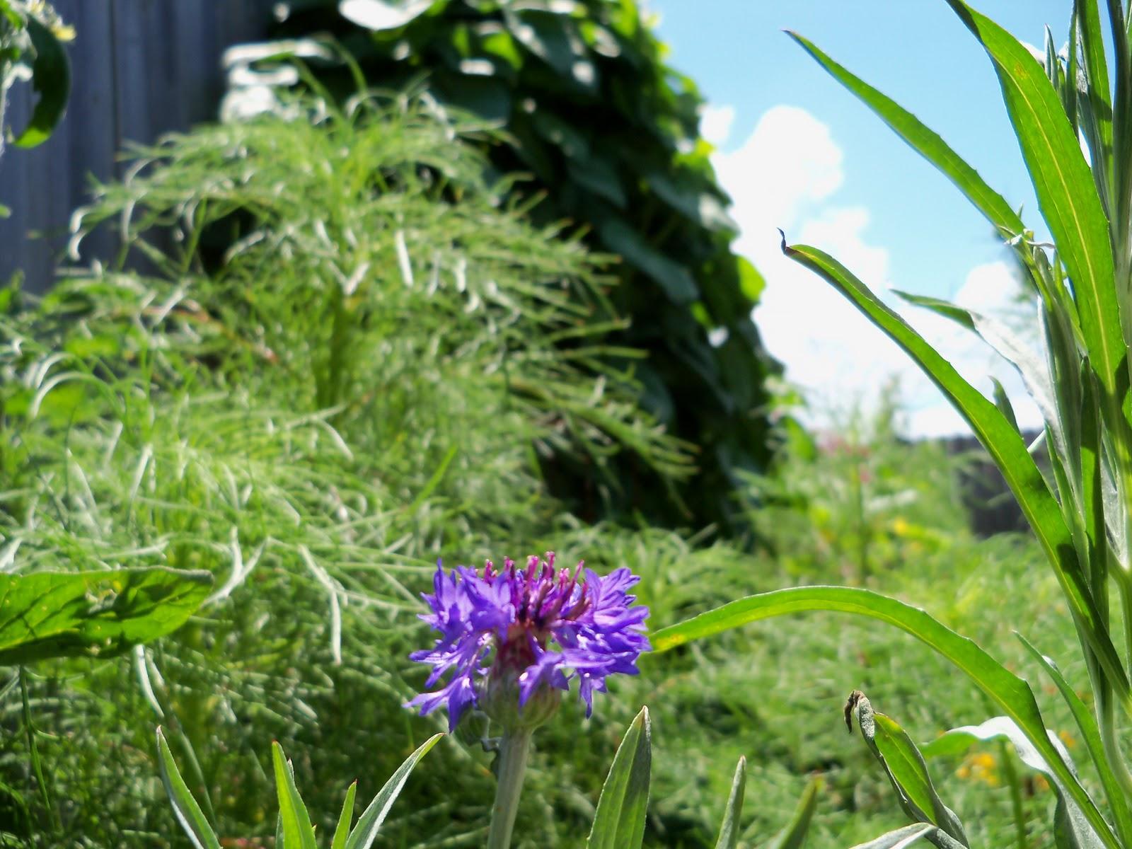 Gardening 2010, Part Three - 101_4428.JPG