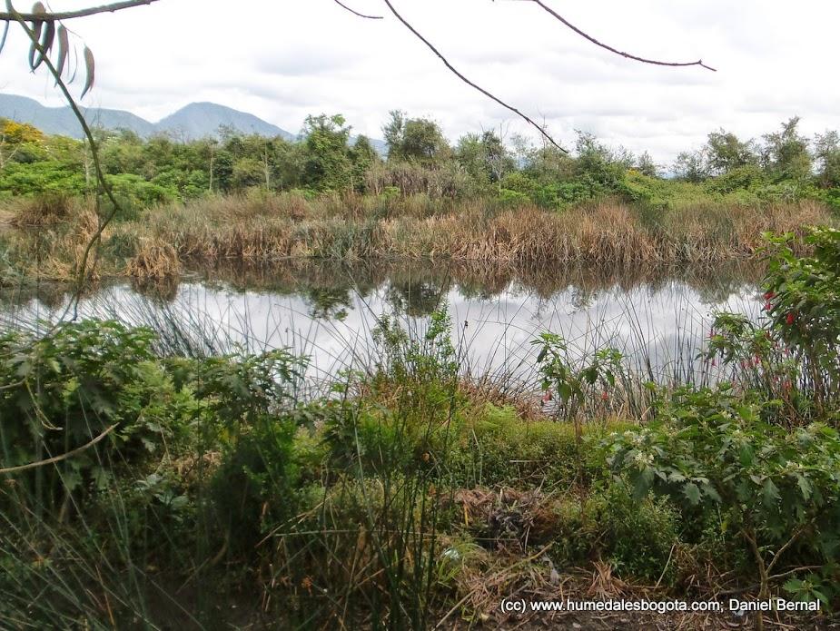 Reserva humedal La Conejera, Octubre 2014