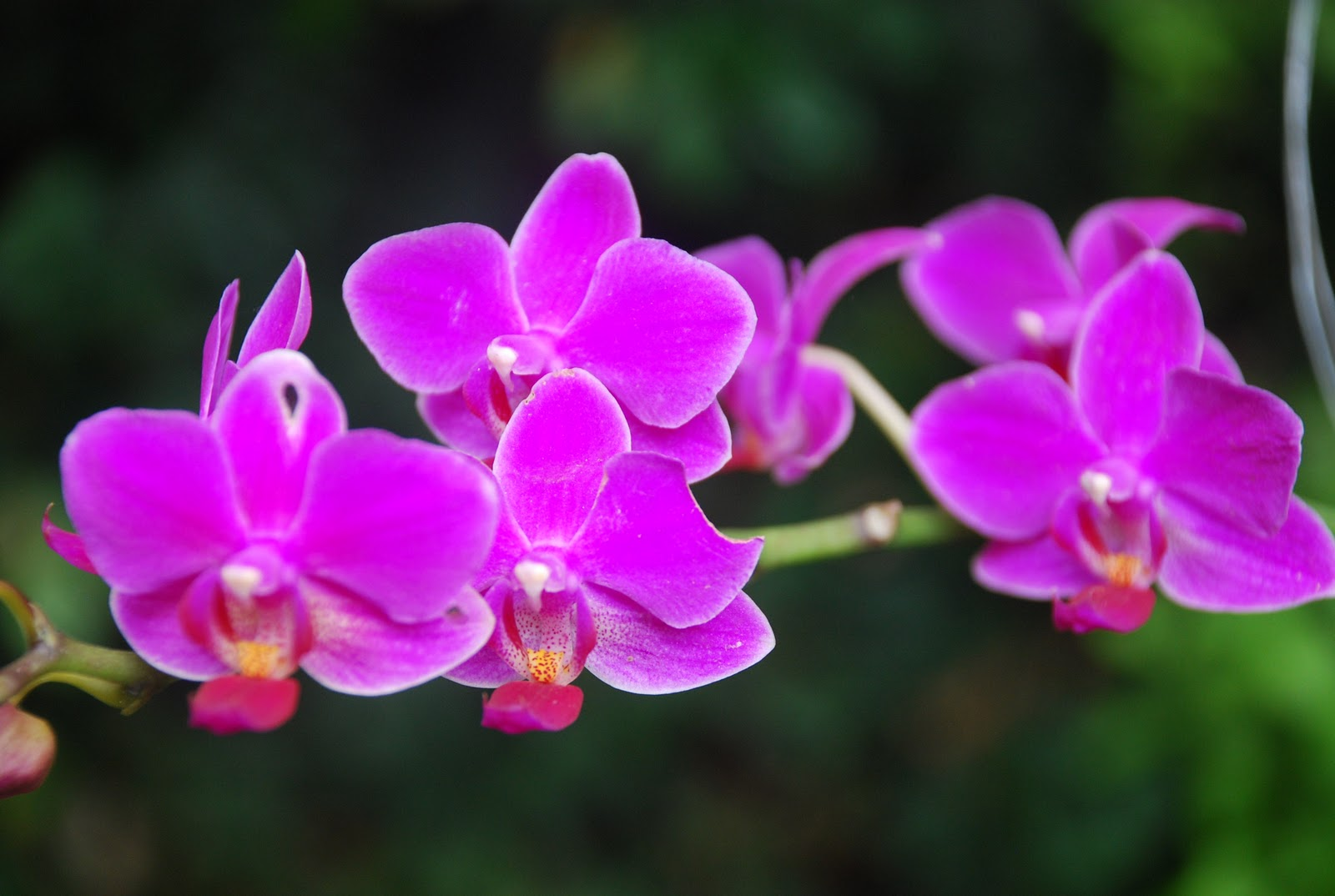 national orchid show – san jose costa rica | costa rica real