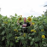 1e zonnebloemen